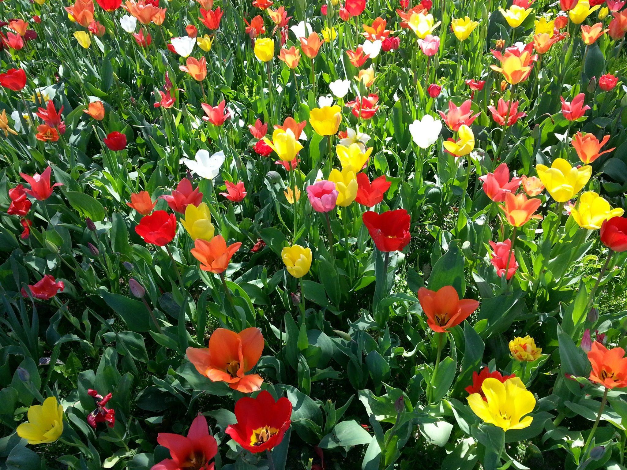 Image De Parterre De Fleurs images gratuites : fleur, printemps, coloré, parterre de