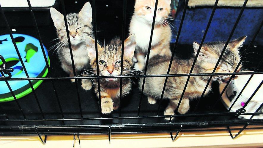 Cause animale : De plus en plus d'abandons, mais aussi d'adoptions - ladepeche.fr