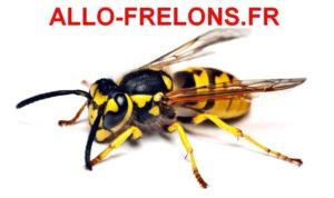 Allo Frelons 47