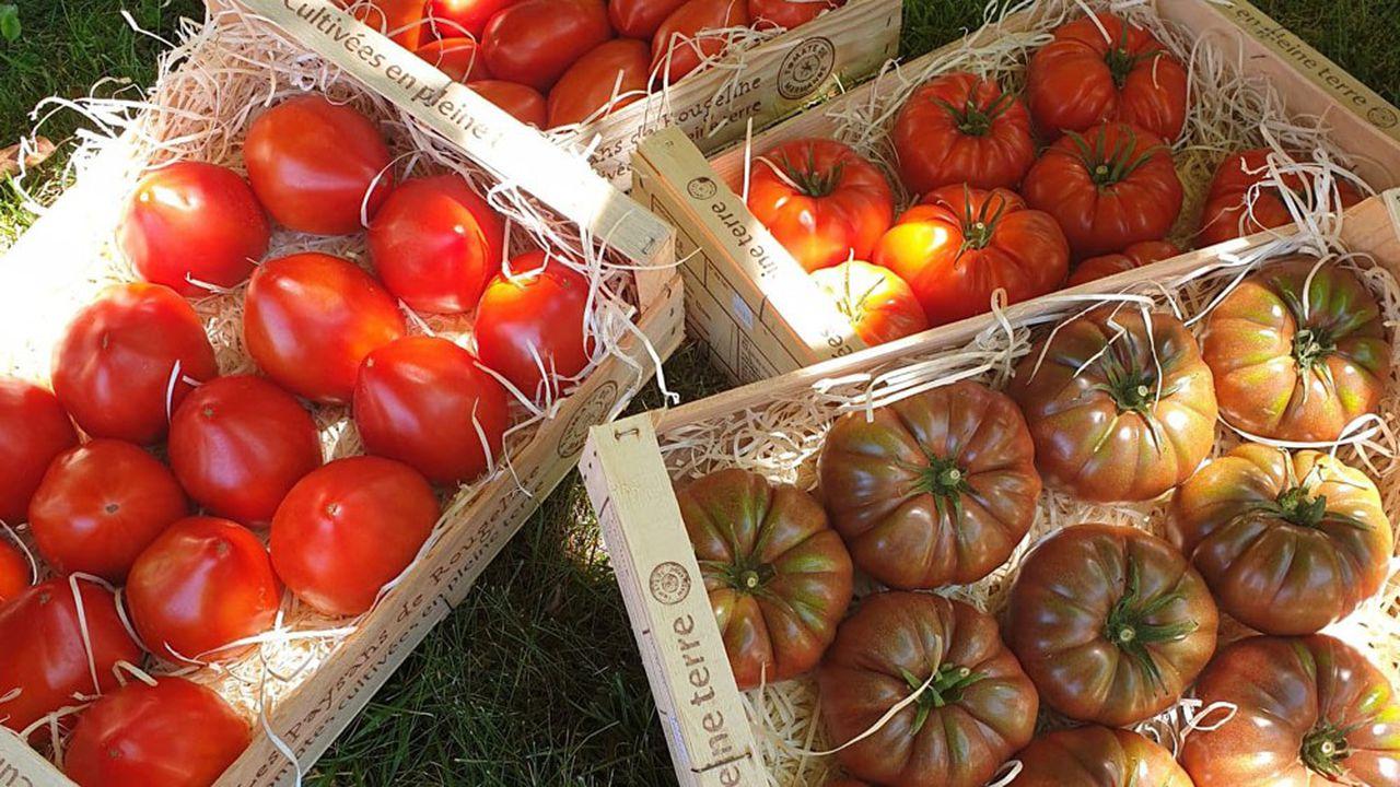 La Tomate de Marmande devient une marque