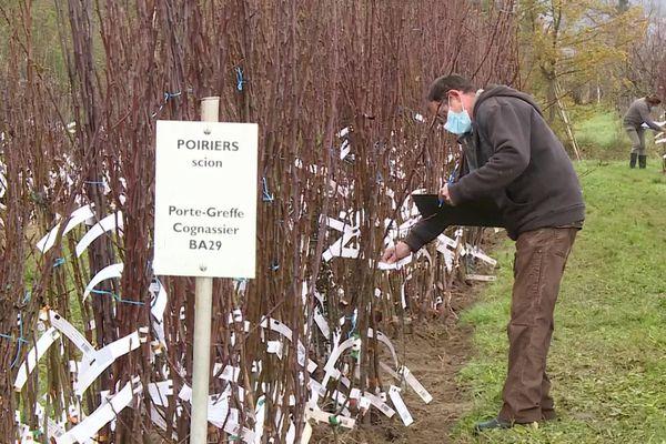 Lot-et-Garonne : les arbres fruitiers du conservatoire végétal régional proposés en clic et collecte