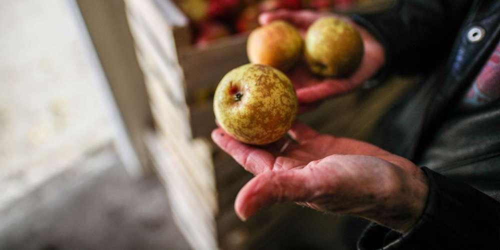 Lot-et-Garonne: pas de Fête de l'arbre à Montesquieu, mais…
