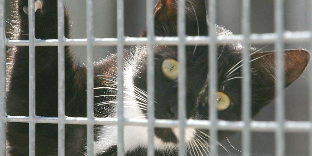 Lot-et-Garonne: toujours près de la moitié des chats récupérés par la fourrière sont euthanasiés