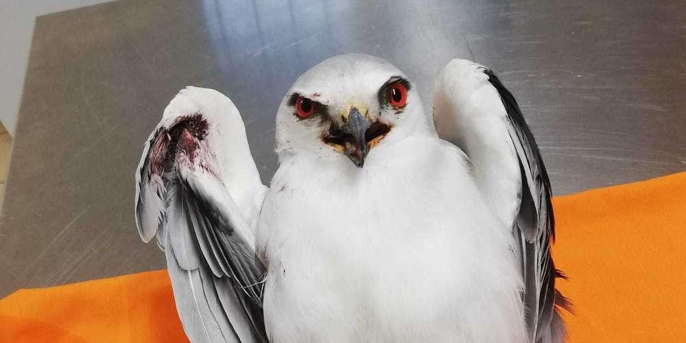 Lot-et-Garonne: un oiseau rare recueilli au centre de soins