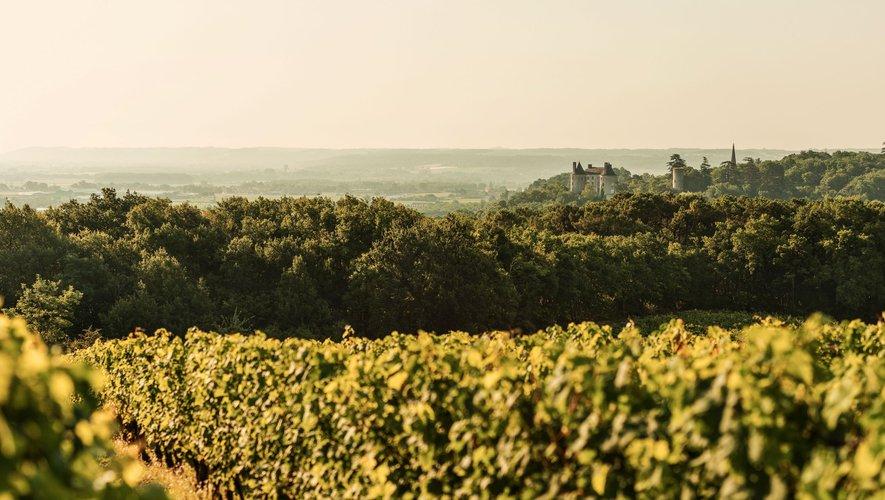 Lot-et-Garonne : les Vignerons de Buzet reconnus «Entreprise Engagée pour la Nature»