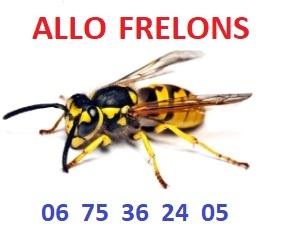 ALLO FRELONS - Premiers nids de frelons asiatiques signalés cette année sur le 47